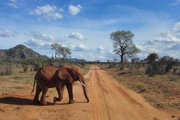 kenya-elefante85EDE641-DDFC-ED5A-BF5E-10F58EB4D7F8.jpg